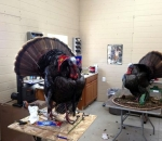 Jims-Wildlife-Creations-Taxidermy-001