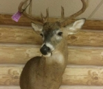 deer-mounts-michigan