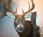 Michigan taxidermist
