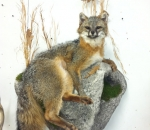 Taxidermist in Michigan