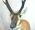 Taxidermist Michigan