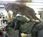 Taxidermy Michigan