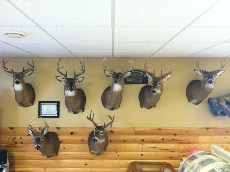 Jim's Wildlife Creations Taxidermy | Pricing