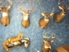 Michigan Taxidermy Showroom