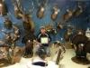 Michigan Taxidermy Showroom