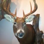 Deer pics 2012 350