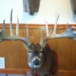 Macomb County, Michigan  Whitetail Dear Mount